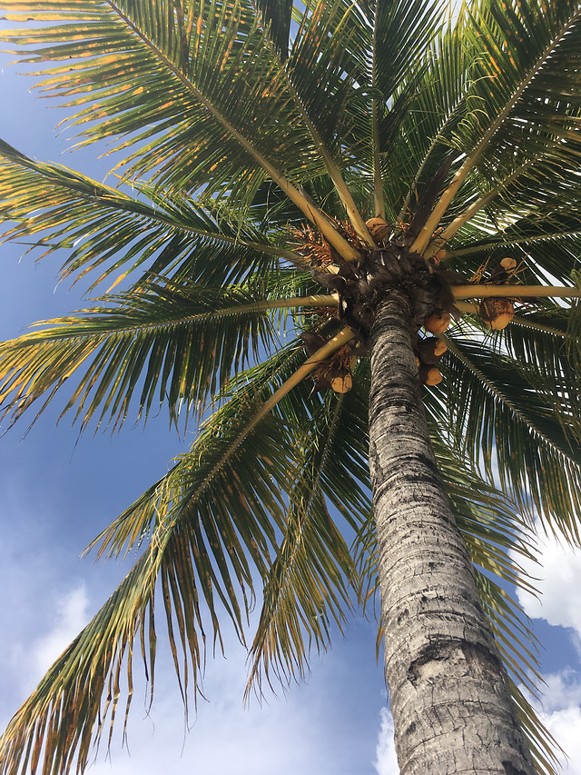 palm-tropical-tree-no-person-beach picture material