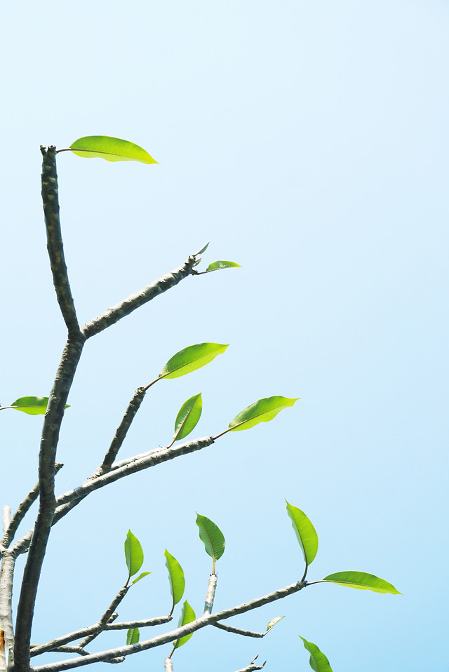 leaf-nature-flora-tree-environment picture material