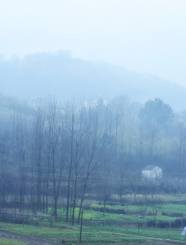 landscape-tree-nature-fog-sky picture material