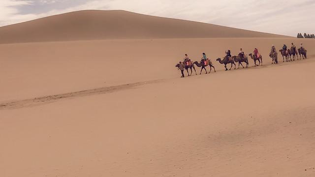 沙漠骆驼 picture material