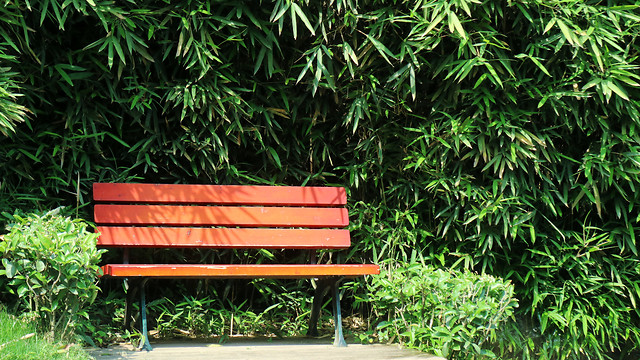 garden-bench-wood-leaf-nature picture material