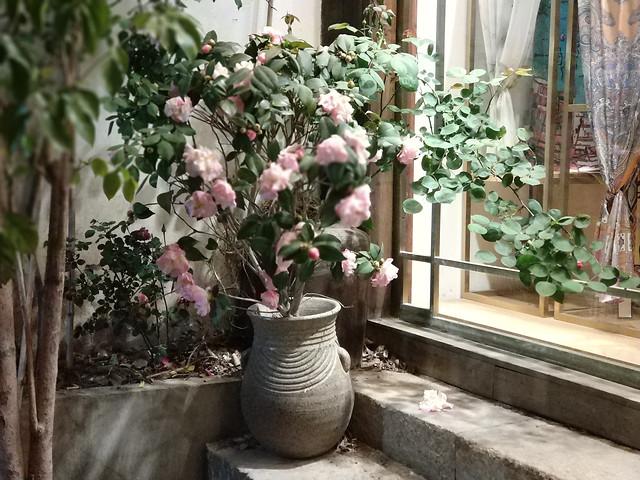 flower-pot-flora-no-person-garden picture material