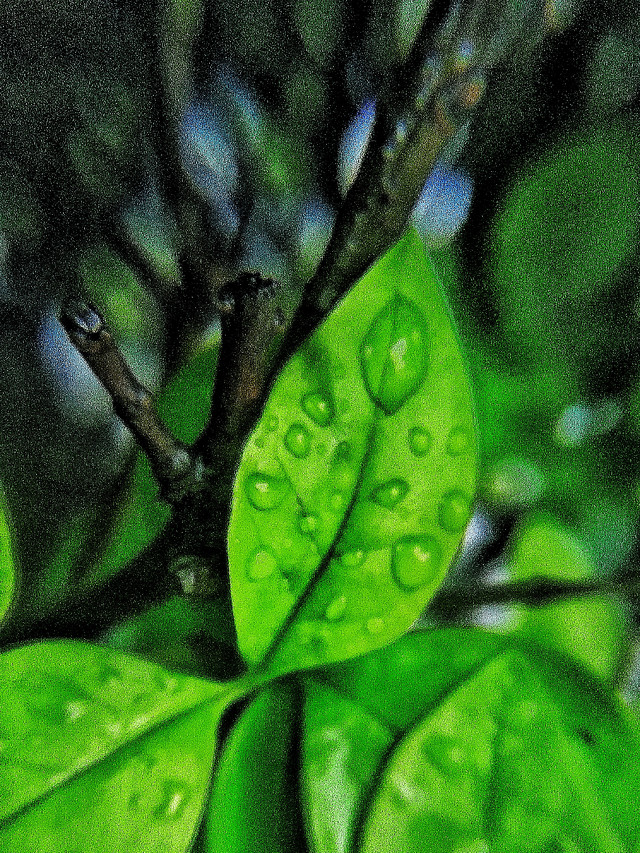 leaf-flora-growth-nature-rain picture material