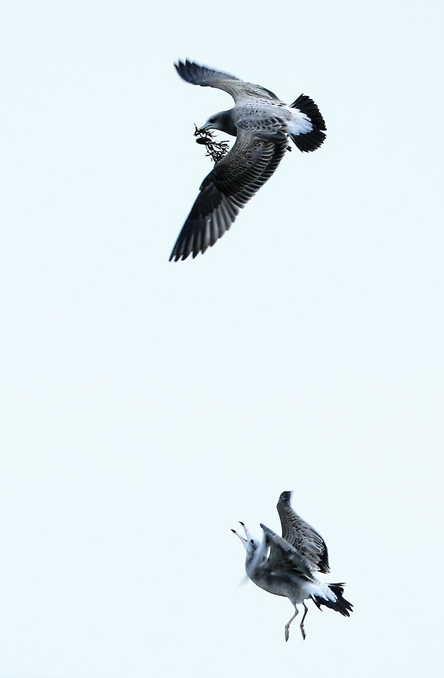 bird-wildlife-nature-no-person-flight picture material