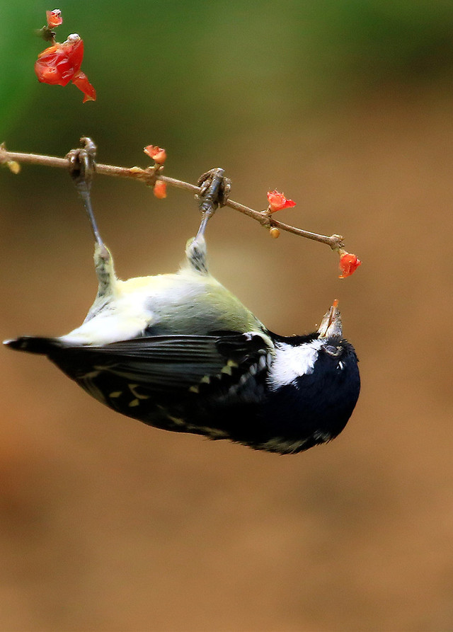 bird-no-person-wildlife-outdoors-nature 图片素材