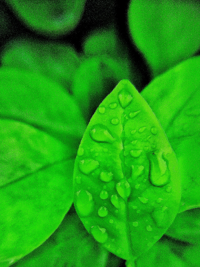 leaf-flora-growth-green-nature picture material