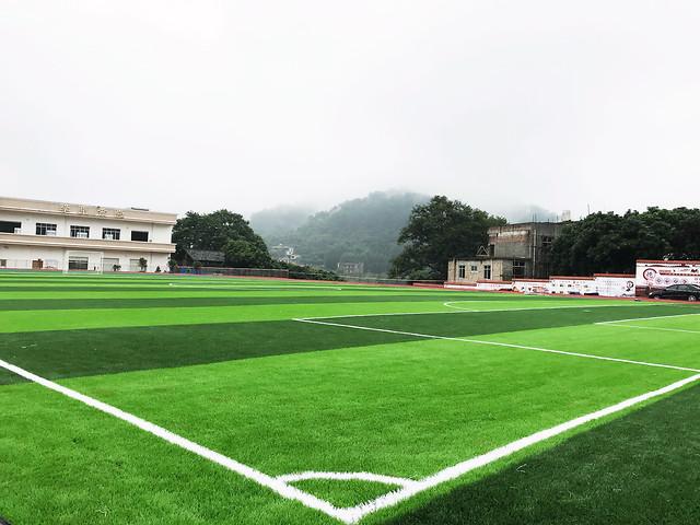 grass-lawn-field-stadium-sport-venue picture material