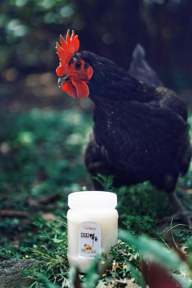 no-person-outdoors-nature-chicken-bird 图片素材