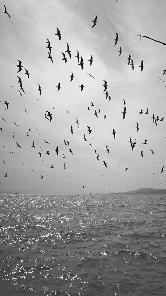 bird-seagulls-goose-water-flock picture material