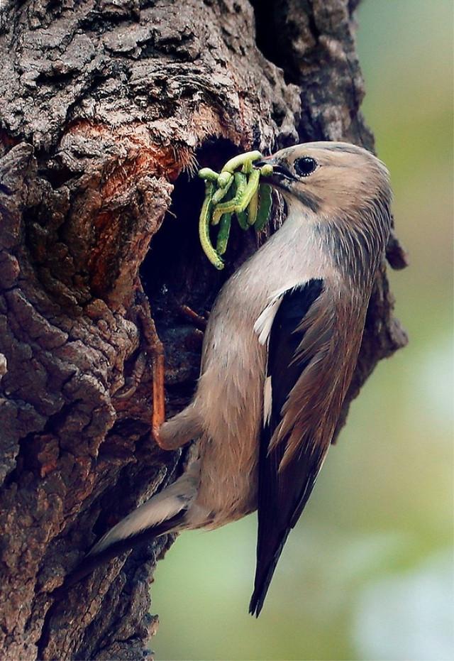 bird-wildlife-nature-no-person-nest 图片素材