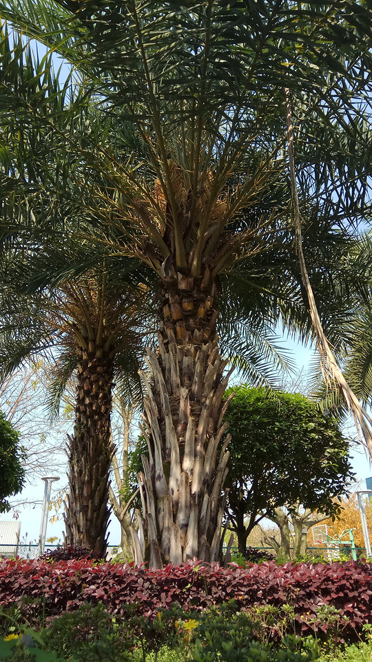 tree-no-person-flora-palm-nature picture material