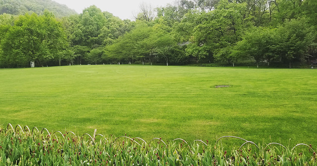 grass-nature-landscape-summer-flora picture material