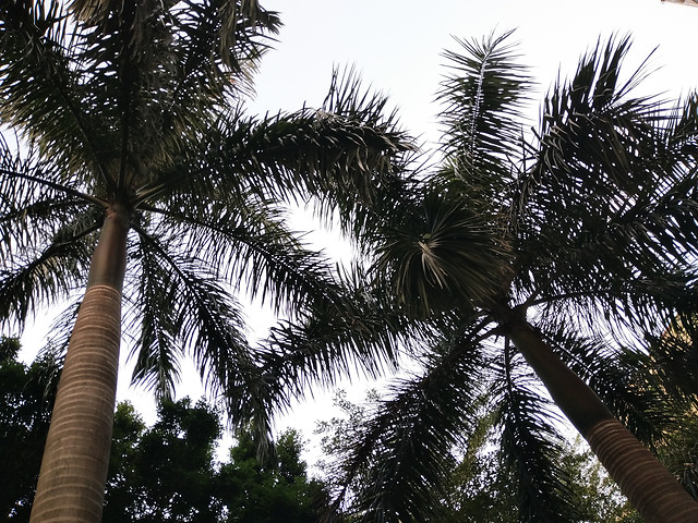 tree-palm-no-person-nature-tropical picture material