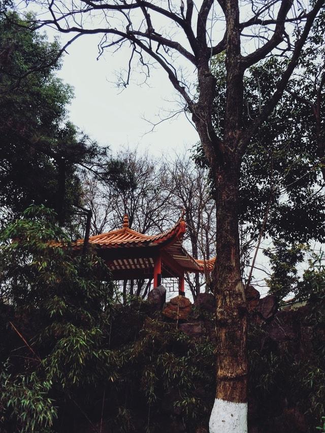 park-tree-sky-branch-woody-plant 图片素材
