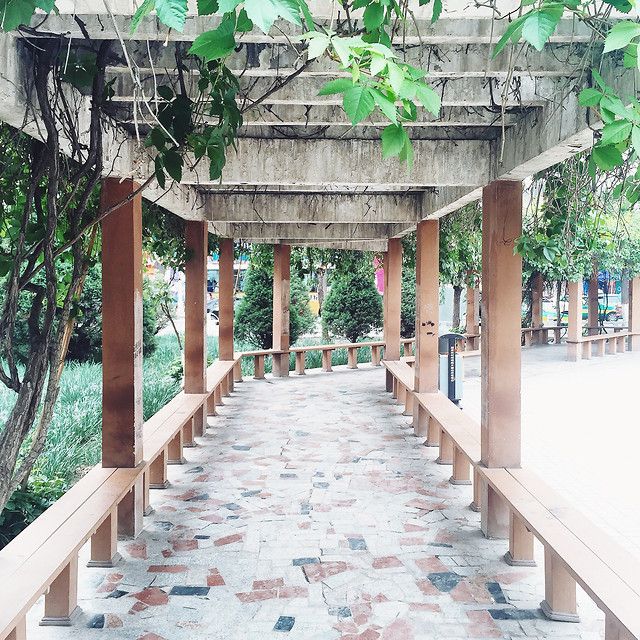 wood-garden-tree-tropical-travel picture material