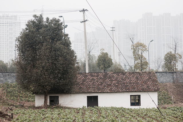 house-no-person-tree-building-architecture 图片素材