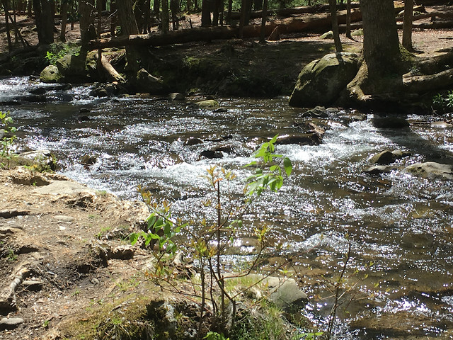 water-stream-river-no-person-wood picture material
