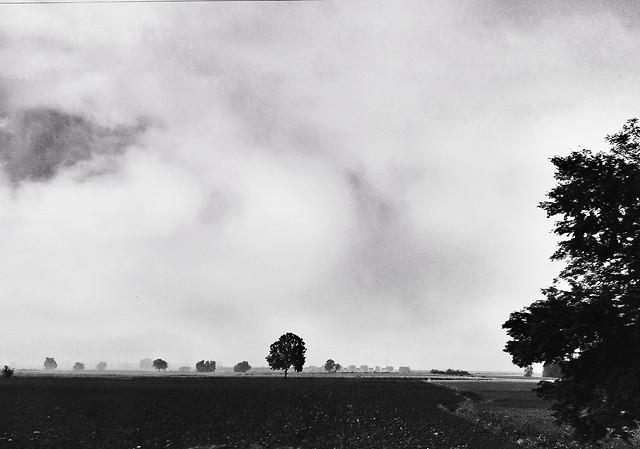 landscape-monochrome-tree-sky-fog picture material