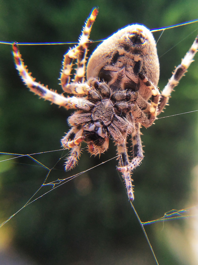 nature-spider-insect-arachnid-no-person picture material