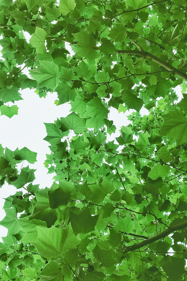 leaf-growth-flora-environment-nature picture material