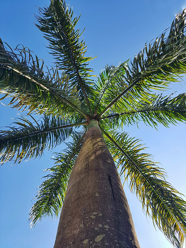 tree-nature-palm-beach-no-person picture material