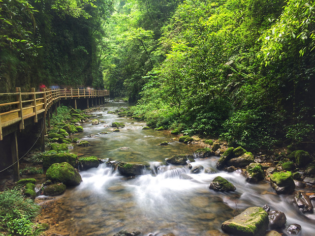water-stream-nature-river-creek picture material