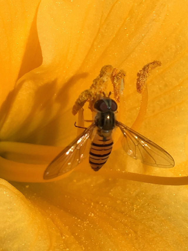 insect-flower-nature-bee-no-person picture material