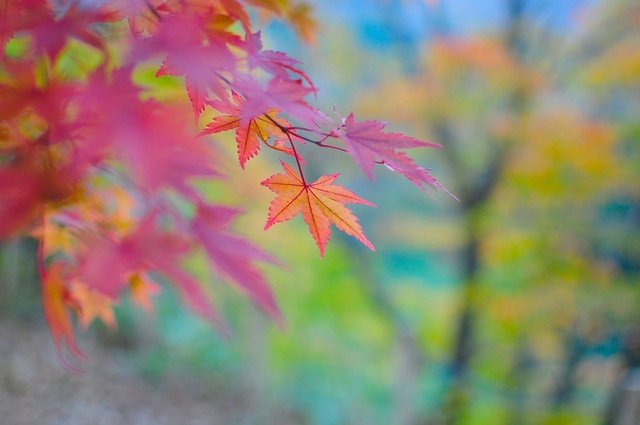 beautiful-leaves-of-autumn-season picture material