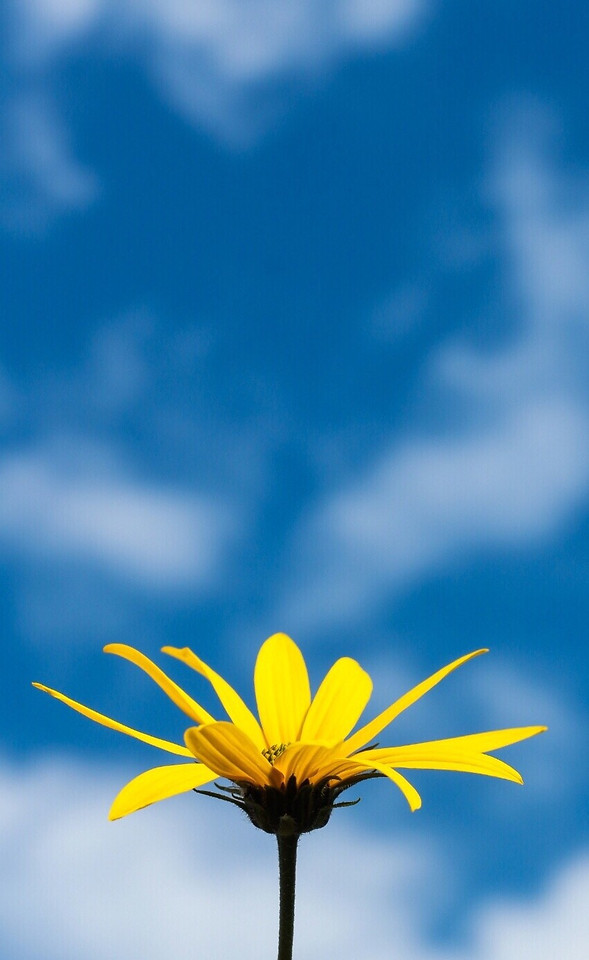 no-person-nature-sky-flower-blue picture material