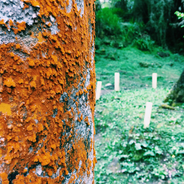 wood-tree-no-person-fall-nature 图片素材