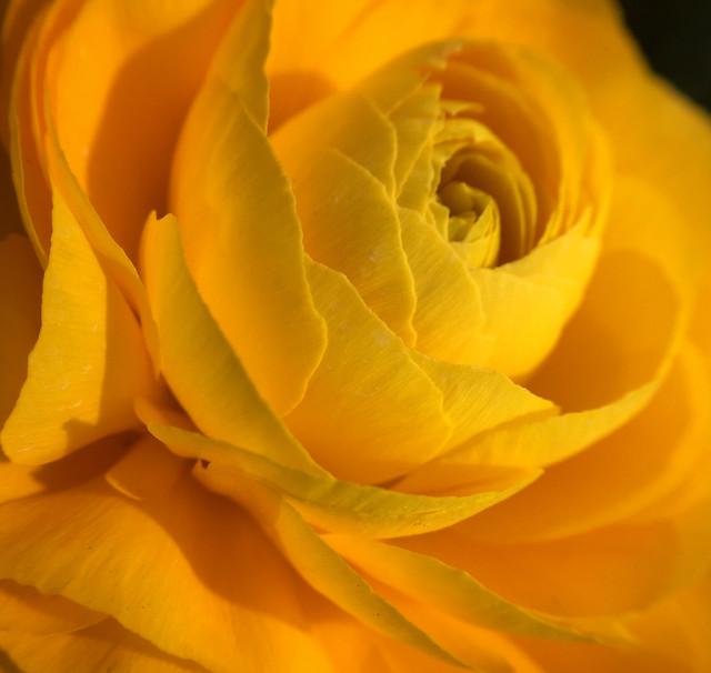 flower-no-person-nature-petal-flora picture material
