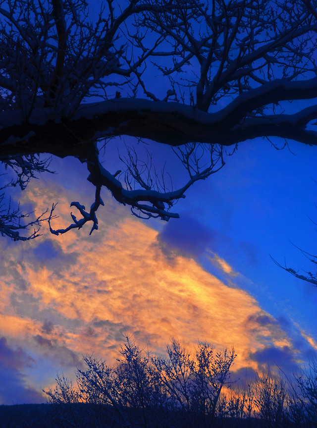 no-person-tree-sky-dawn-landscape picture material