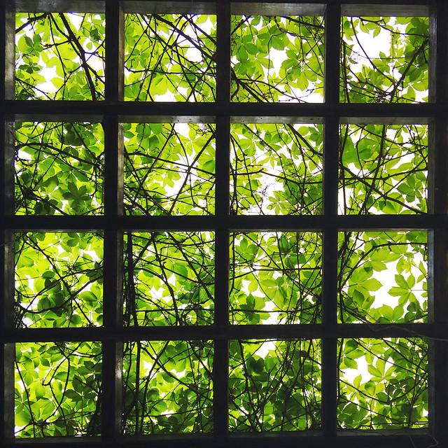 window-leaf-no-person-desktop-light picture material