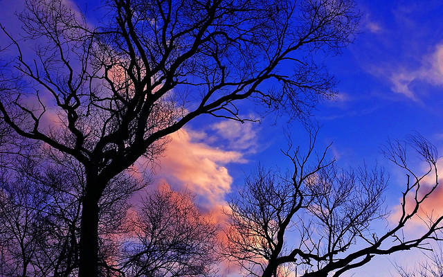 tree-dawn-sky-no-person-wood picture material