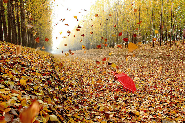 fall-leaf-nature-season-wood picture material