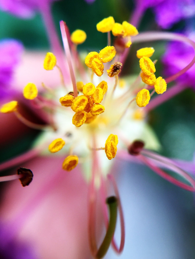 flower-nature-flora-color-closeup picture material