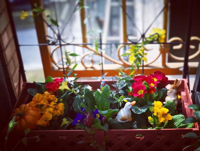 flower-pot-flowerpot-garden-greenhouse picture material