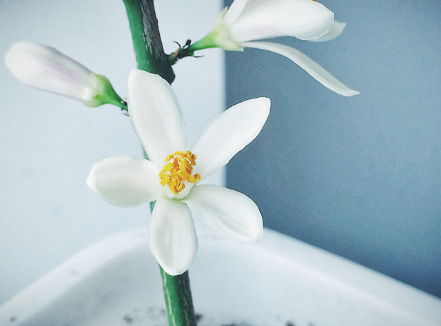 flower-no-person-nature-flora-white 图片素材