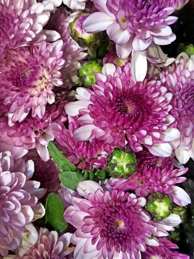 flower-nature-flora-floral-petal picture material