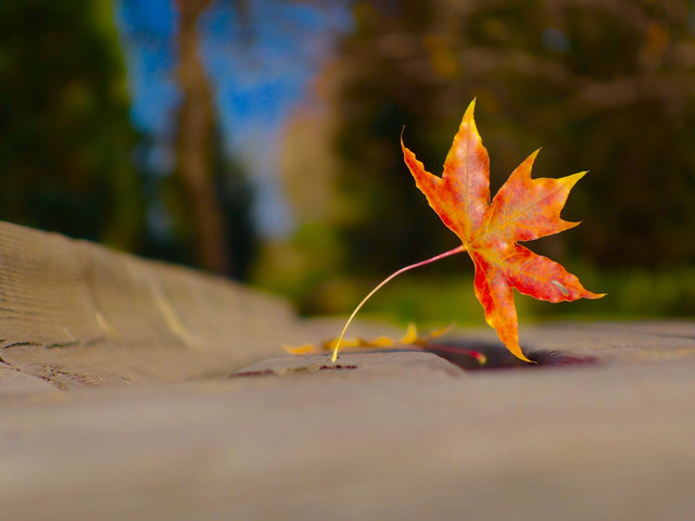 leaf-no-person-fall-nature-outdoors 图片素材