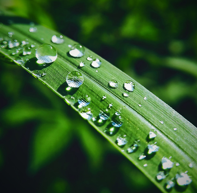 rain-dew-droplet-leaf picture material