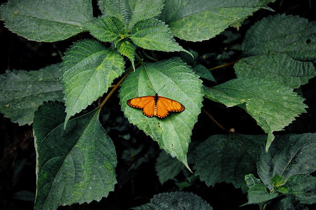 no-person-leaf-nature-outdoors-butterfly picture material