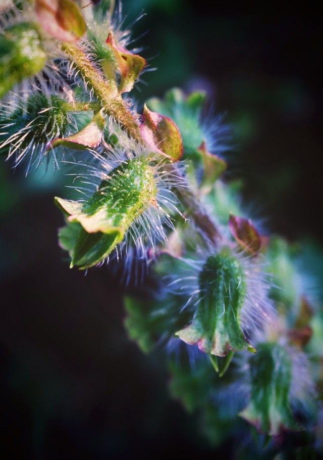 flora-leaf-flower-tree-mobile-photography picture material