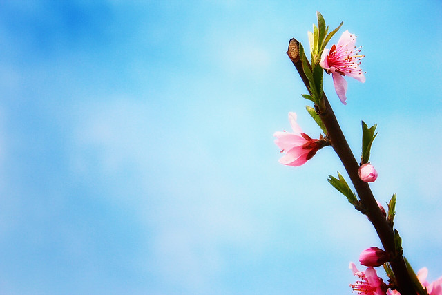flower-nature-no-person-leaf-sky picture material