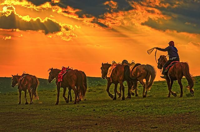 cavalry-mammal-grassland-sky-equestrian picture material