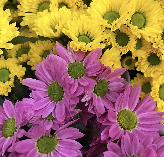 flower-petal-floral-nature-flora picture material