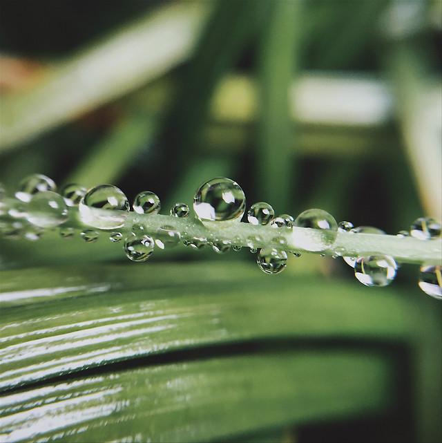 rain-drop-dew-droplet-wet picture material