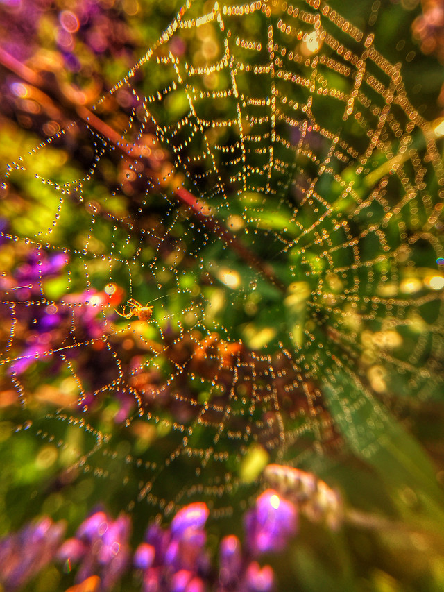 spider-trap-spiderweb-web-together-abstract picture material