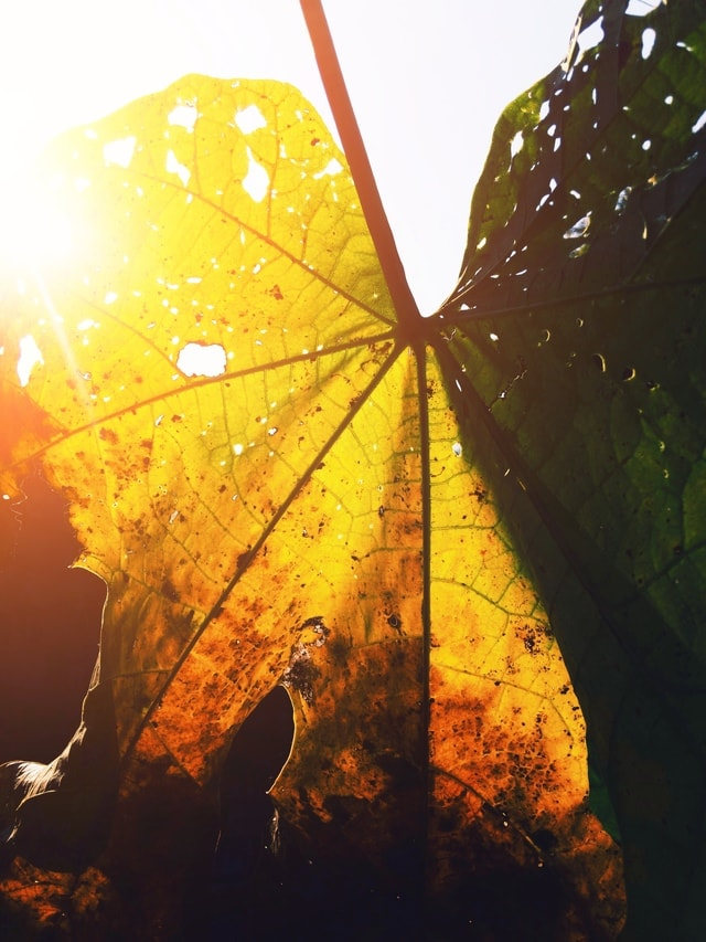 leaf-light-tree-mobile-photography-light-and-shadow picture material