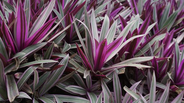 flora-nature-texture-plant-color 图片素材